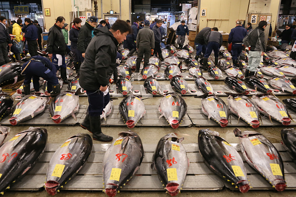 Fish「First Auction For 2015 Held At Tsukiji Fish Market」:写真・画像(10)[壁紙.com]