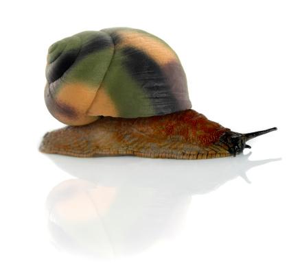snails「Armysnail」:スマホ壁紙(3)