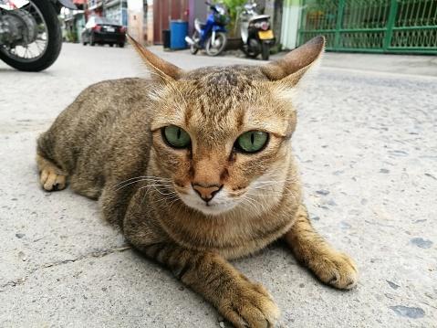 Kitten「Abandoned cat」:スマホ壁紙(12)