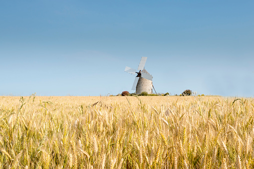 Mill「France, Normandy, Wheat field, Triticum, Wind mill」:スマホ壁紙(4)
