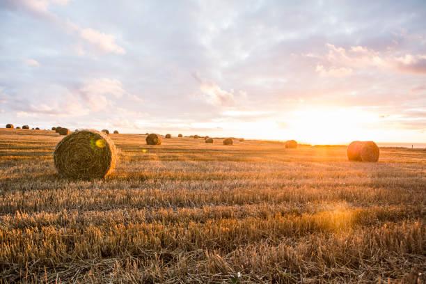 France, Normandy, Yport, straw bales on field at sunset:スマホ壁紙(壁紙.com)