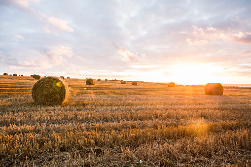 Cultivated Land「France, Normandy, Yport, straw bales on field at sunset」:スマホ壁紙(9)