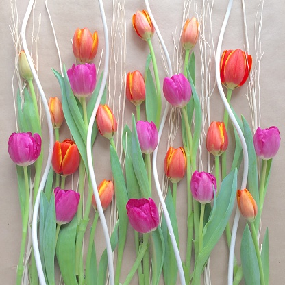 チューリップ「Colorful tulip decoration」:スマホ壁紙(17)