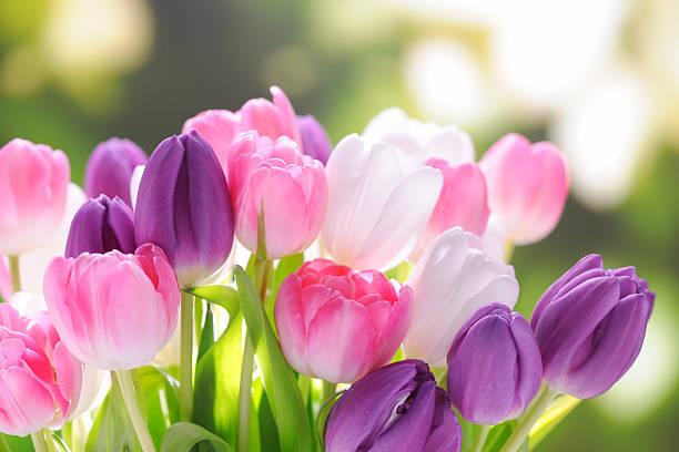 Colorful tulips:スマホ壁紙(壁紙.com)