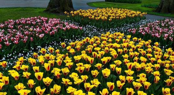 キューケンホフ公園「Colorful Tulips announce spring」:スマホ壁紙(16)
