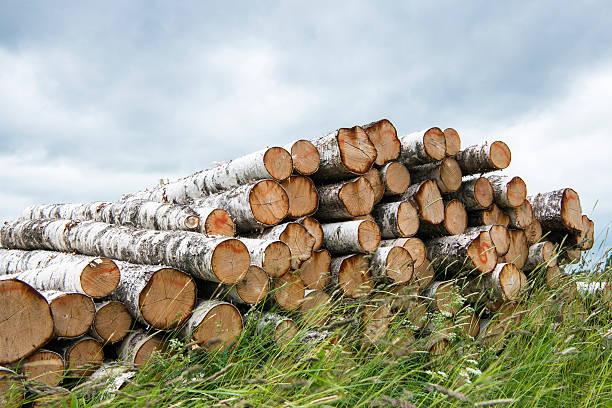 Pile of silver birch logs:スマホ壁紙(壁紙.com)