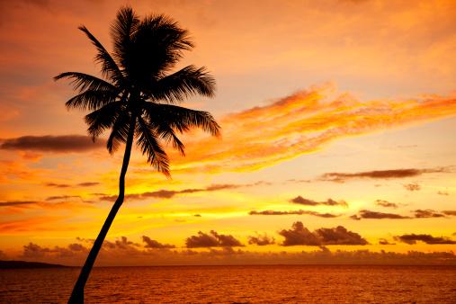 Single Tree「Palm Tree Silhouette」:スマホ壁紙(7)