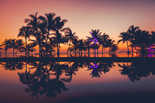 Resort「palm tree silhouettes at sunset, africa」:スマホ壁紙(17)