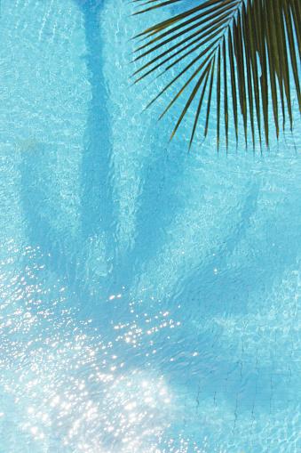 Water Surface「Palm Tree shadow in swimming pool」:スマホ壁紙(4)