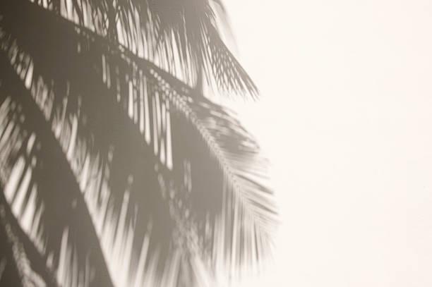 Palm Tree Shadows on White Wall:スマホ壁紙(壁紙.com)