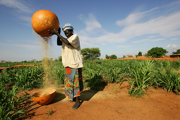 Millet「Niger Suffers Food Crisis」:写真・画像(7)[壁紙.com]