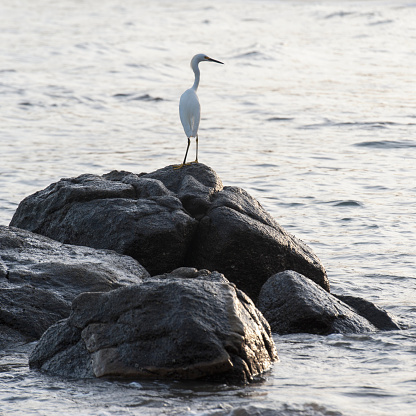 Sayulita「A bird stands on a rock surrounded by water; sayulita mexico」:スマホ壁紙(15)