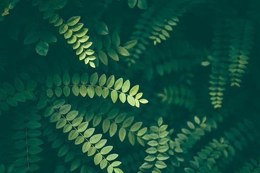 Botany「Leaf Background」:スマホ壁紙(15)