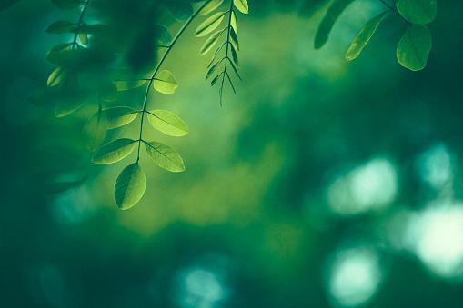 Dark「Leaf Background」:スマホ壁紙(19)