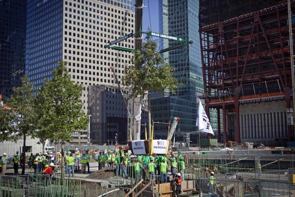 Tree「First Trees Planted Around Memorial Plaza At Ground Zero」:写真・画像(18)[壁紙.com]
