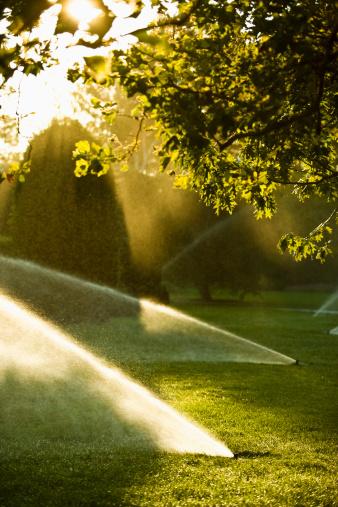Sprinkler「Lawn watering spray from the garden hose」:スマホ壁紙(2)