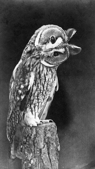 Curiosity「Quizzical Owl」:写真・画像(13)[壁紙.com]