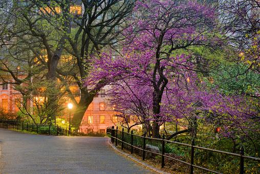 Pedestrian Zone「NYC Central Park Manhattan Spring Dusk Scene」:スマホ壁紙(9)