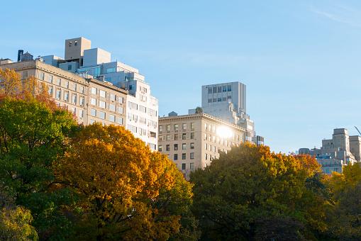 秋「Central Park East Residences behind Autumn color trees from Central park.」:スマホ壁紙(11)