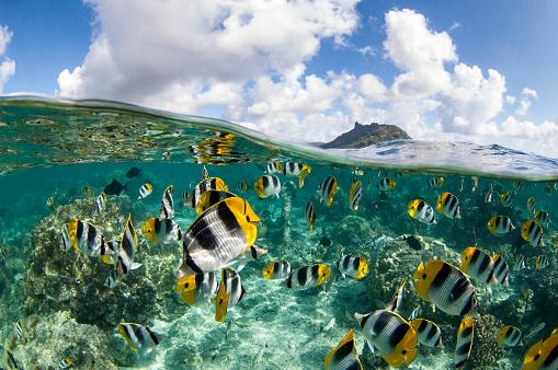 熱帯魚「フランス領ポリネシア - 南太平洋」:スマホ壁紙(2)