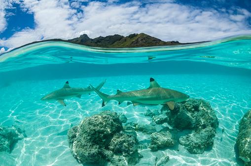 Desert Island「French Polynesia - South Pacific Ocean」:スマホ壁紙(14)