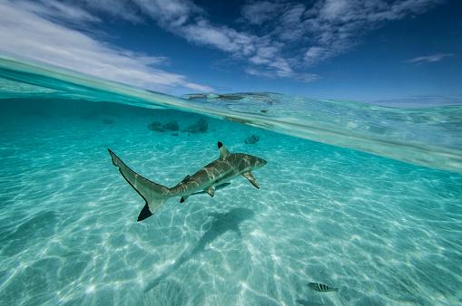 熱帯魚「フランス領ポリネシア - 南太平洋」:スマホ壁紙(17)