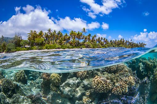 熱帯魚「フランス領ポリネシア - 南太平洋」:スマホ壁紙(9)
