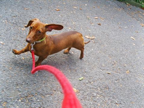 Pets「Walking the Dog」:スマホ壁紙(14)