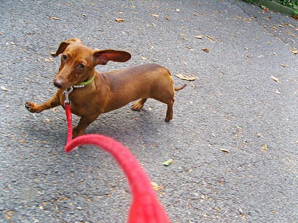 Walking the Dog:スマホ壁紙(壁紙.com)