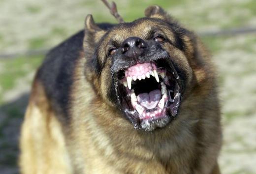 犬「Attack Dog Training」:写真・画像(9)[壁紙.com]