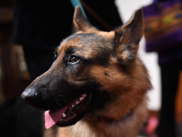 Vertebrate「American Kennel Club Presents The Nation's Most Popular Breeds Of 2015」:写真・画像(14)[壁紙.com]