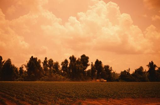 Insecticide「Fertilizing Crops」:スマホ壁紙(11)