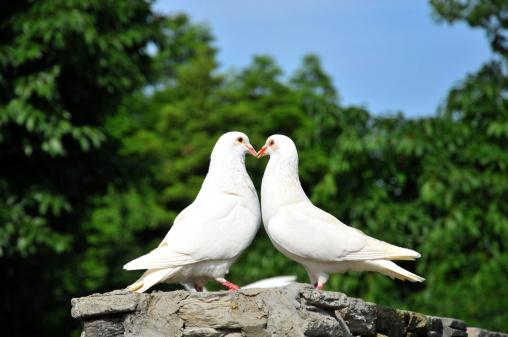 Love - Emotion「two loving white doves」:スマホ壁紙(10)