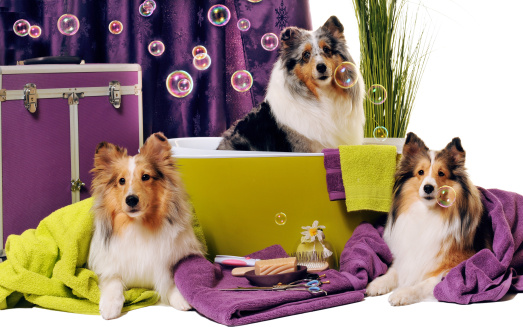 Harlequin「Dog grooming session」:スマホ壁紙(6)