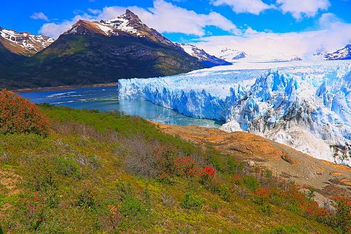 Wildflower「Moreno Glacier and red wildflowers, Lake Argentina – El Calafate, Patagonia」:スマホ壁紙(15)