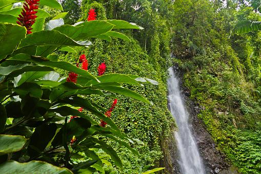 Grenadines「Dark View Falls, St Vincent」:スマホ壁紙(8)