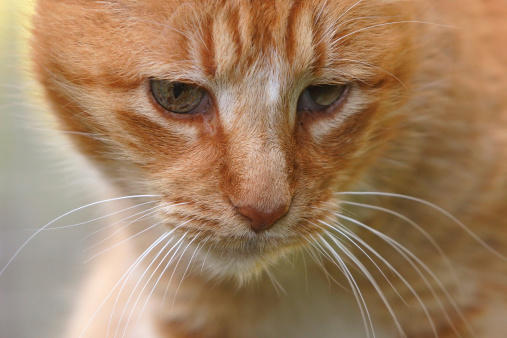 Cat「Very Old Cat」:スマホ壁紙(8)