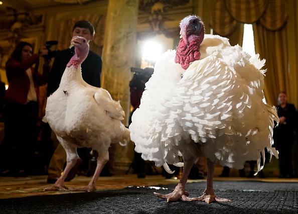 Bread「National Thanksgiving Turkeys Meet The Media Ahead Of Presidential Pardoning」:写真・画像(17)[壁紙.com]