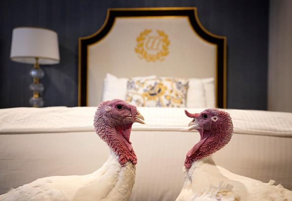 Bread「National Thanksgiving Turkeys Meet The Media Ahead Of Presidential Pardoning」:写真・画像(15)[壁紙.com]