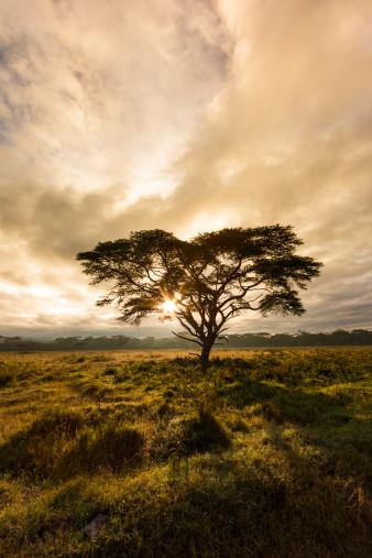 Kenya「Africa,Kenya,View of Lake Nakuru National Park」:スマホ壁紙(11)