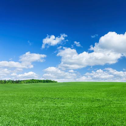 Agricultural Field「Square spring landscape XXXXL 31 MPix - meadow, blue sky」:スマホ壁紙(8)
