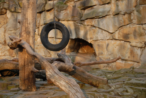 動物園「ゲームのホイール」:スマホ壁紙(5)