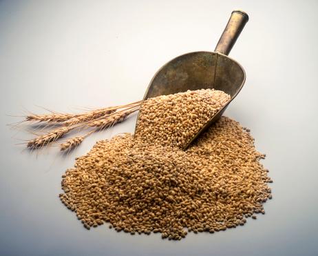 Gray Background「Wheat in scoop」:スマホ壁紙(0)