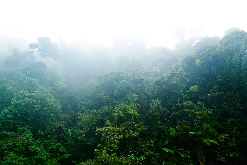 かすみ「Malaysia, Cloudy Rainforest」:スマホ壁紙(3)