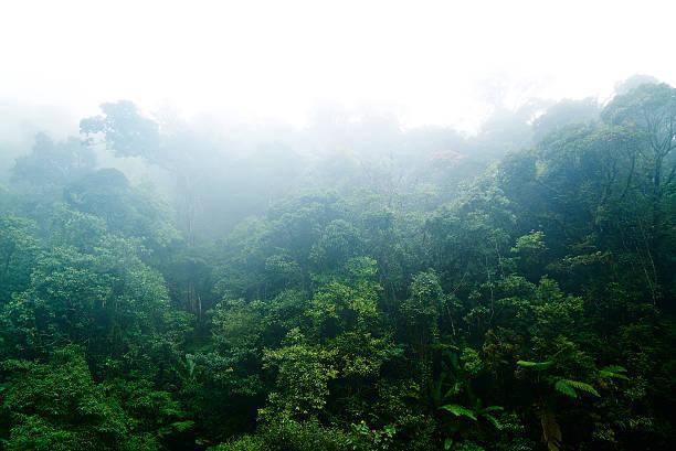 Malaysia, Cloudy Rainforest:スマホ壁紙(壁紙.com)