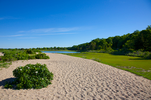 Riverbank「Bluff Point State Park, Groton, Connecticut」:スマホ壁紙(14)