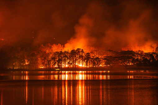 Deforestation「Forest fire wildfire at night time with lake water reflection」:スマホ壁紙(16)