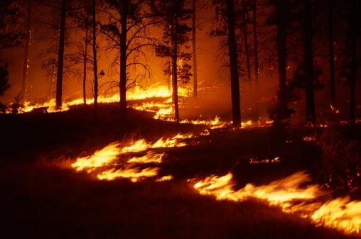 Burnt「Forest fire at night」:スマホ壁紙(4)