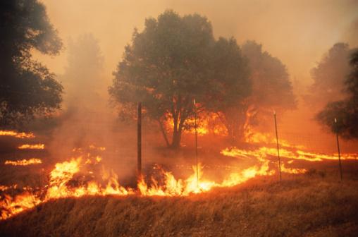Forest Fire「Forest fire」:スマホ壁紙(5)