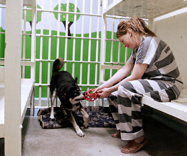 Females「Jail Inmates Care For Abused And Abandoned Pets」:写真・画像(7)[壁紙.com]